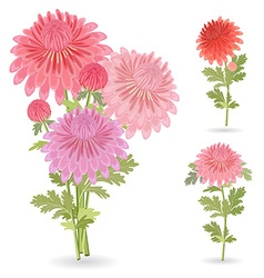 collection of beautiful chrysanthemums for your vector image