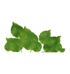 green leaves together icon vector image