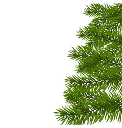 Green lush spruce branch Fir branches Isolated vector