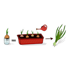 Growing green onions at home isolated elements on vector