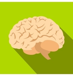 Human brain flat icon with shadow vector