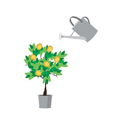 Watering money tree vector image