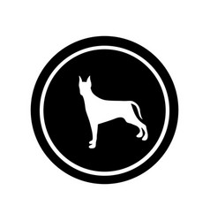 circular frame with figure doberman pinscher dog vector image
