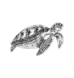 Black and white hand drawn sea turtle vector