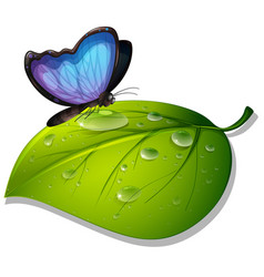 Blue butterfly on green leaf on white background vector