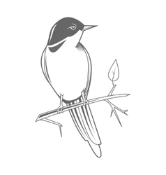 Engraving bird nightingale emblem vector image