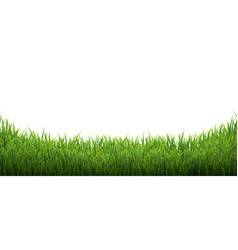 Green grass isolated white background vector