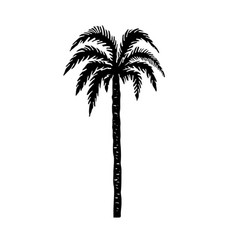 hand drawn palm tree design element for poster vector image