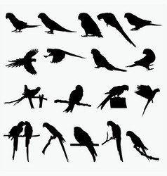 silhouettes parrot vector image