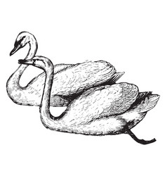 swan vintage vector image