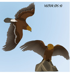 Two realistic golden eagles vector