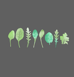 Watercolor set salad leaves vector