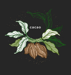 cacao wreath natural chocolate template vector image