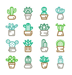 cacruses thin line icon vector image