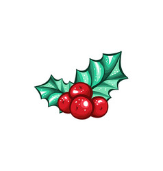 Christmas berry holly or ilex isolated plant vector