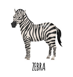 Cute zebra in flat style vector