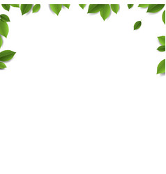 Green leaves frame isolated white background vector