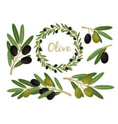 olives branches and olive crown greek olives vector image