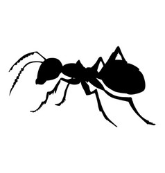 Ordinary ant vector