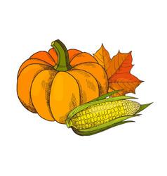 Pumpkin and corn maize autumn harvesting vector