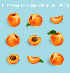 Set ripe apricots on a blue background vector