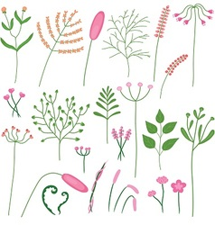set of poaceae and leaves vector image