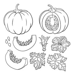 botanical set with isolated pumpkins flowers vector image