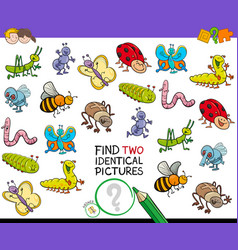 Find two identical bug pictures game for kids vector