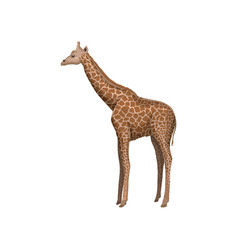 Giraffe wild african animal on vector
