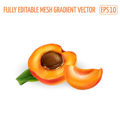 Ripe apricot half with pit and a slice on a white vector
