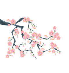 Branch sakura or cherry blossoms vector