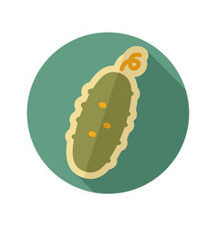 cucumber flat icon vegetable vector image