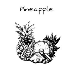 hand drawn vintage isolated pineapple vector image