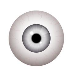 realistic human eyeball vector image