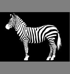 White and black animal zebra vector