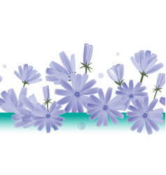 chicory flowers seamless pattern design vector image