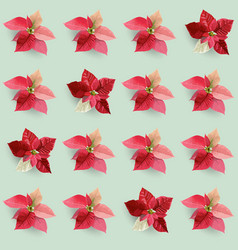 christmas poinsettia flowers seamless background vector image