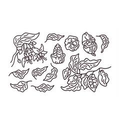cocoa abstract set art line symbol vector image
