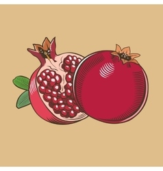 Pomegranates in vintage style Colored vector image