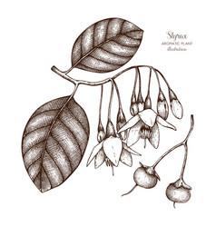 Styrax tree plant vector
