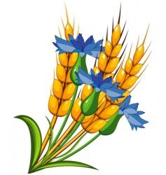 wheat flower vector image