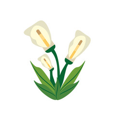 Calla lily flower image vector