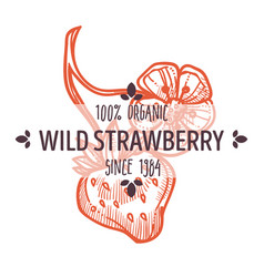 herbal tea ingredient wild strawberry isolated vector image