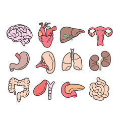 Human organs isolated internal body parts anatomy vector