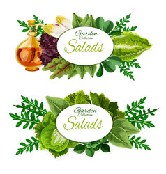 Lettuce salad and spinach leaves vegetable food vector