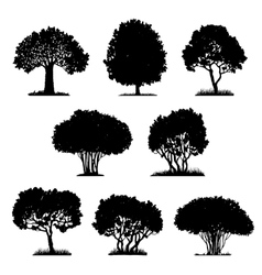 Set tree silhouettes vector