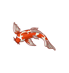top view japanese asian koi carp goldfish vector image