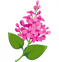lilac vector image vector image