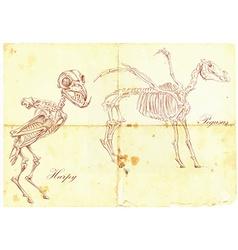An hand drawn Harpy Pegasus vector