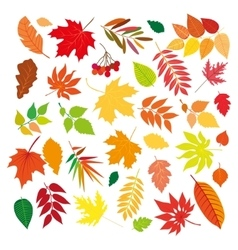 Big set of beautiful colorful autumn leaves vector